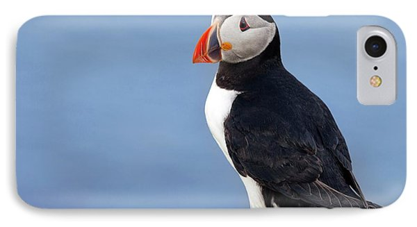 Atlantic Puffin IPhone Case by Alex Hyde