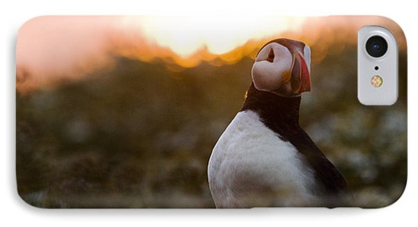 Atlantic Puffin At Sunrise Skomer IPhone Case by Sebastian Kennerknecht