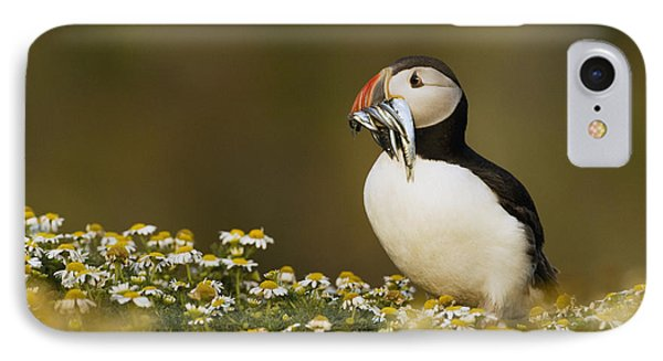 Atlantic Puffin Carrying Fish Skomer IPhone Case by Sebastian Kennerknecht