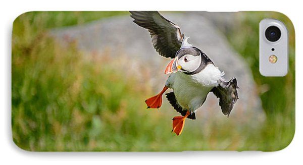 Atlantic Puffin, Incoming.... IPhone Case by IPics Photography