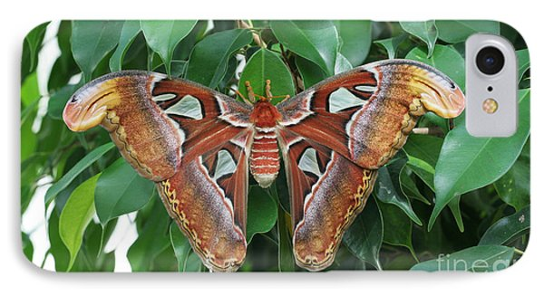 IPhone Case featuring the photograph Atlas Moth #2 by Judy Whitton