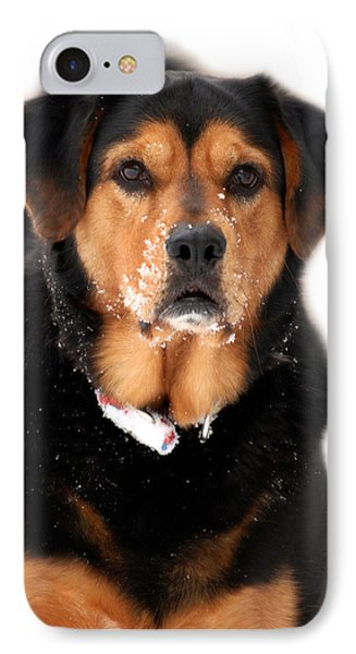 Attentive Labrador Dog IPhone Case by Christina Rollo