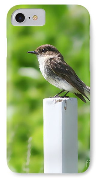 IPhone Case featuring the photograph Attentive Phoebe by Anita Oakley