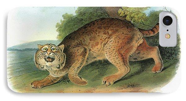 Audubon Bobcat IPhone Case by Granger