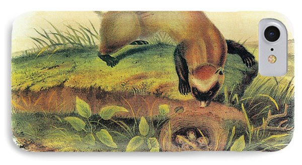 Audubon Ferret IPhone Case