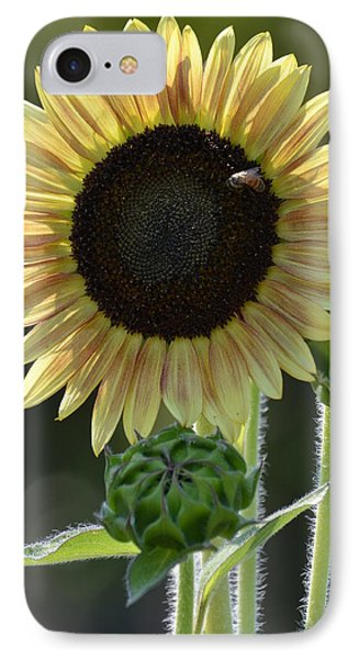 August Sunflower IPhone Case by P S