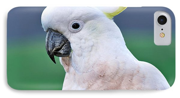 Australian Birds - Cockatoo IPhone Case by Kaye Menner