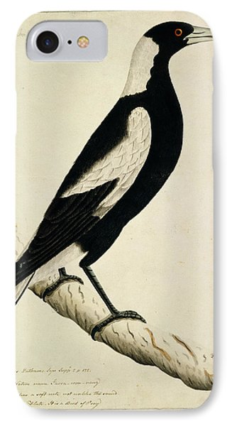 Australian Magpie IPhone Case by Natural History Museum, London