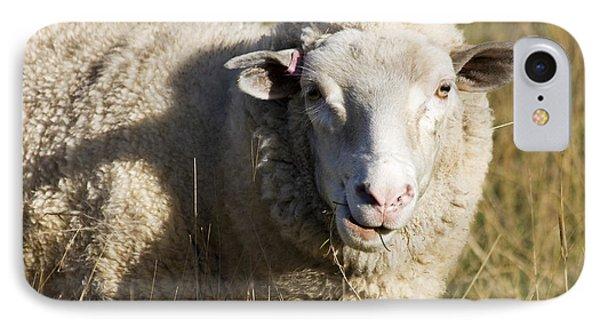 Australian Sheep Portrait IPhone Case by Jorgo Photography - Wall Art Gallery