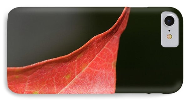 IPhone Case featuring the photograph Autumn 2 by Tara Lynn
