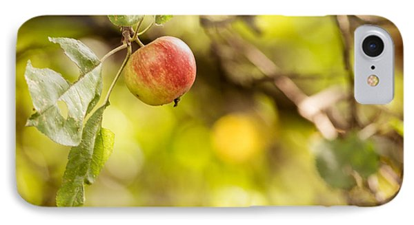 Autumn Apple IPhone Case by Matt Malloy