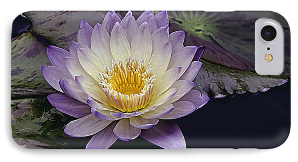 Autumn Aquatic Bloom IPhone Case by Julie Palencia