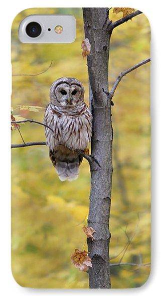 Autumn Barred Owl IPhone Case by Daniel Behm