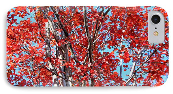 Autumn Brilliance V Phone Case by Suzanne Gaff