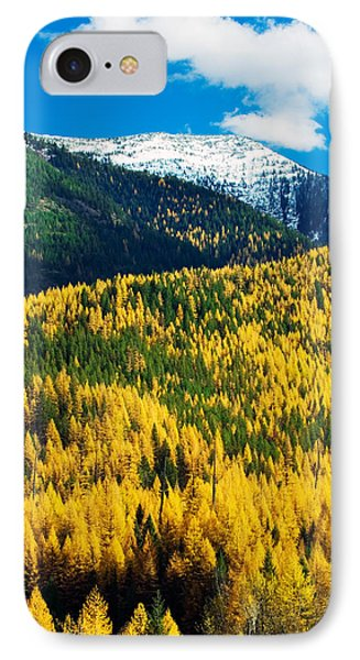 Autumn Color Larch Trees In Pine Tree IPhone Case by Panoramic Images