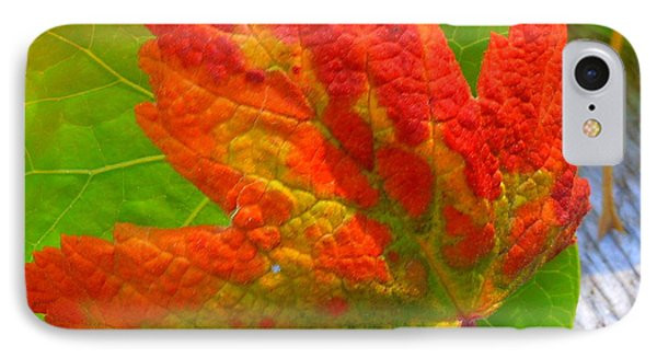 IPhone Case featuring the photograph Autumn Delight by Karen Horn