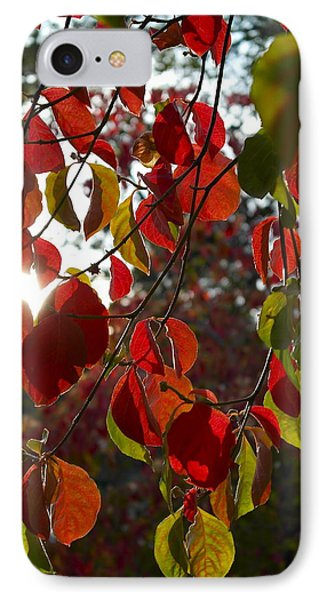Autumn Dogwood In Evening Light IPhone Case by Michele Myers