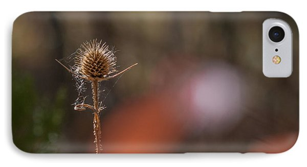 IPhone Case featuring the photograph Autumn Dry Teasel by Jivko Nakev