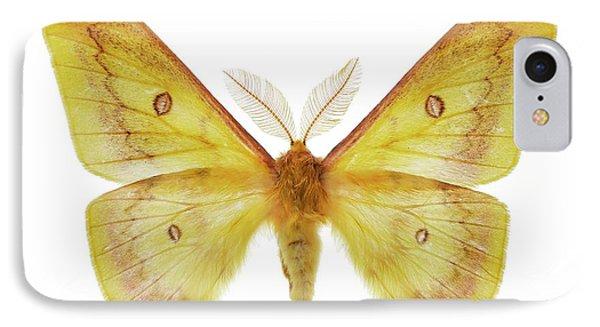 Autumn Emperor Moth IPhone Case by F. Martinez Clavel