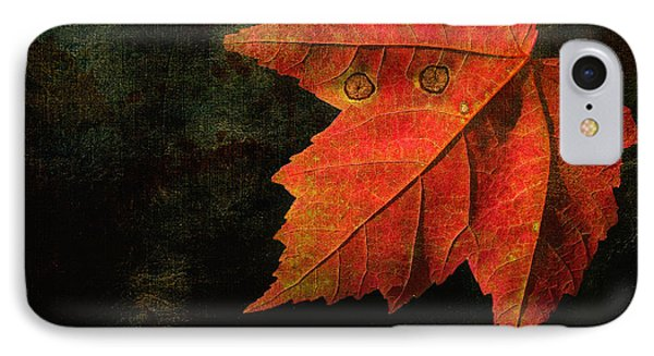 Autumn Eyes IPhone Case by Kathi Mirto