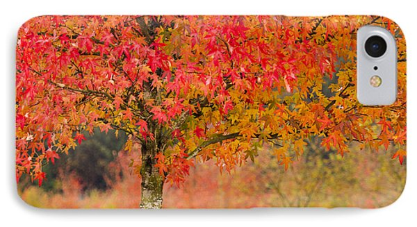 Autumn Fire IPhone Case by Sonya Lang