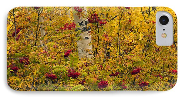Autumn Forest Colors IPhone Case by Leland D Howard