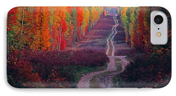 Autumn Forest Road IPhone Case by Dennis Cox WorldViews
