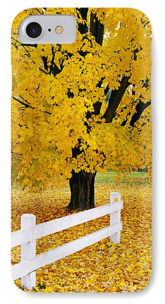 Autumn Gold IPhone Case by Alan L Graham