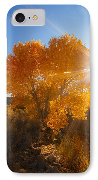 Autumn Golden Birch Tree In The Sun Fine Art Photograph Print IPhone Case