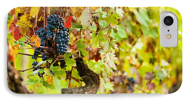 Autumn Grape Harvest Season IPhone Case by Susan Schmitz