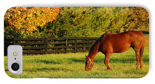 Autumn Grazing IPhone Case by James Kirkikis