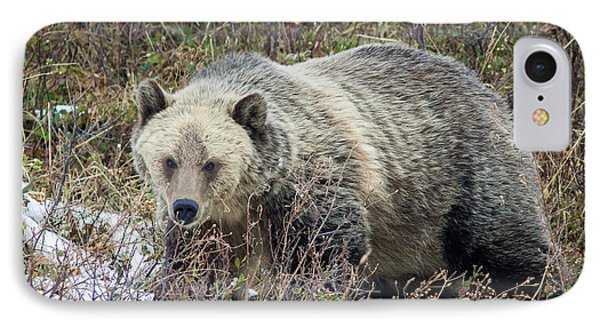 IPhone Case featuring the photograph Autumn Grizzly by Jack Bell