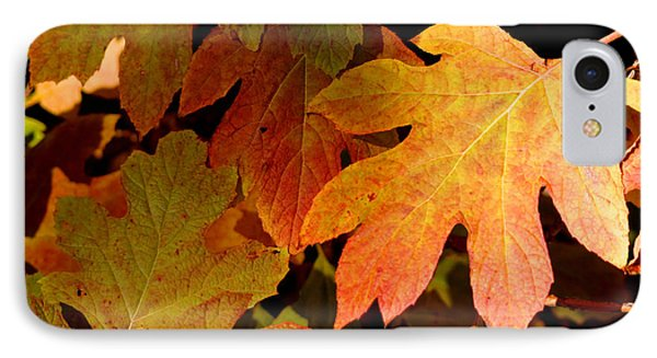 Autumn Hues IPhone Case by Living Color Photography Lorraine Lynch