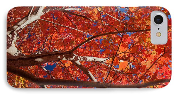 Autumn In Australia IPhone Case by Carole Hinding
