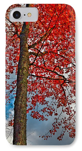 Autumn In The Trees Phone Case by David Patterson