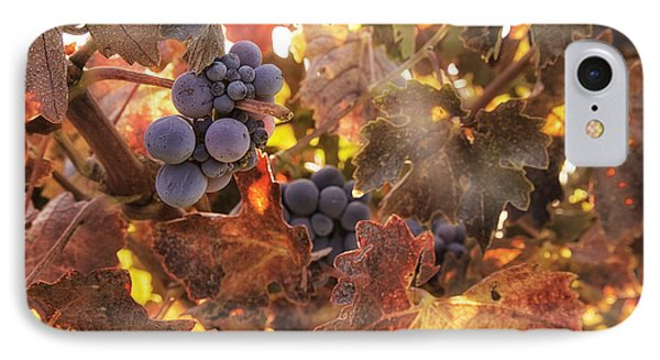 Autumn In The Vineyard IPhone Case by Michele Steffey