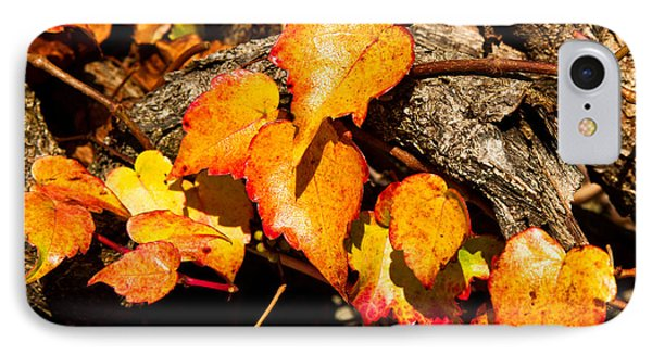 IPhone Case featuring the photograph Autumn Ivy by Crystal Hoeveler
