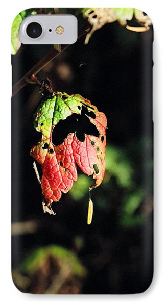 IPhone Case featuring the photograph Autumn Leaf by Cathy Mahnke