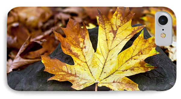 IPhone Case featuring the photograph Autumn Leaf by Crystal Hoeveler