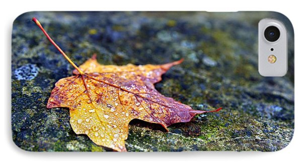 Autumn Leaf On Rocky Ledge IPhone Case by Terri Gostola