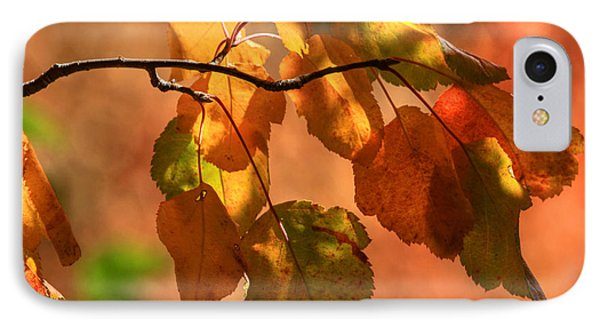 Autumn Leaves Phone Case by Donna Kennedy