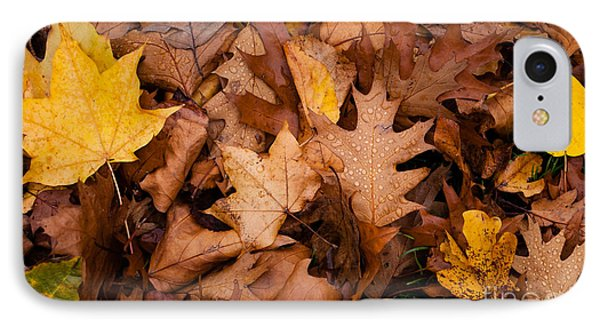 IPhone Case featuring the photograph Autumn Leaves by Matt Malloy