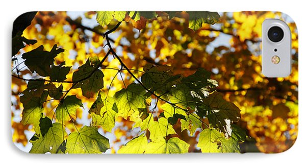 IPhone Case featuring the photograph Autumn Light In Leaves by Lincoln Rogers