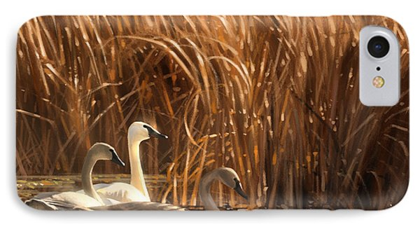 Autumn Light- Trumpeter Swans IPhone Case by Aaron Blaise