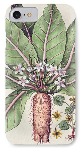 Autumn Mandrake IPhone Case