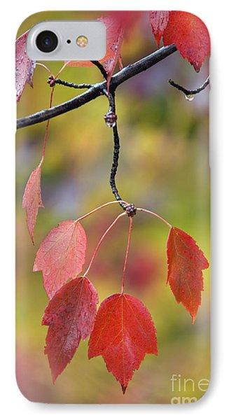 Autumn Maple - D008640 IPhone Case by Daniel Dempster