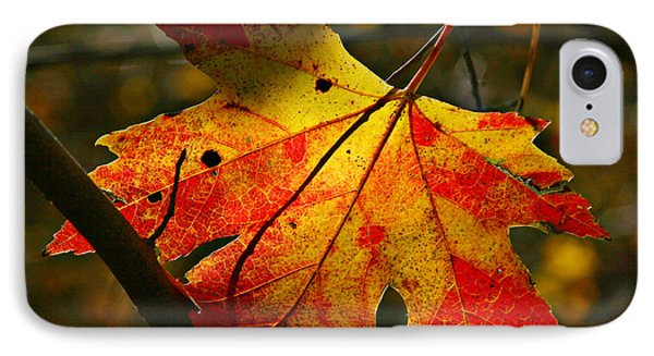Autumn Maple Leaf IPhone Case by Richard Engelbrecht