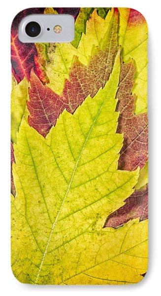 Autumn Maple Leaves Phone Case by Adam Romanowicz