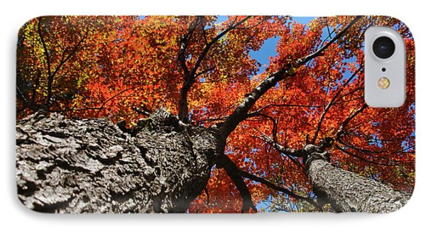 Autumn Nature Maple Trees Phone Case by Christina Rollo