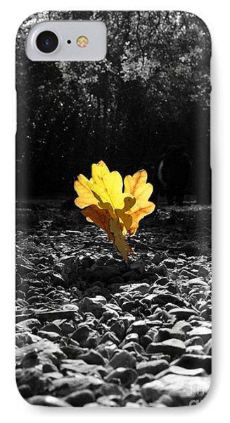 Autumn Oak Isolations Phone Case by Terri Waters